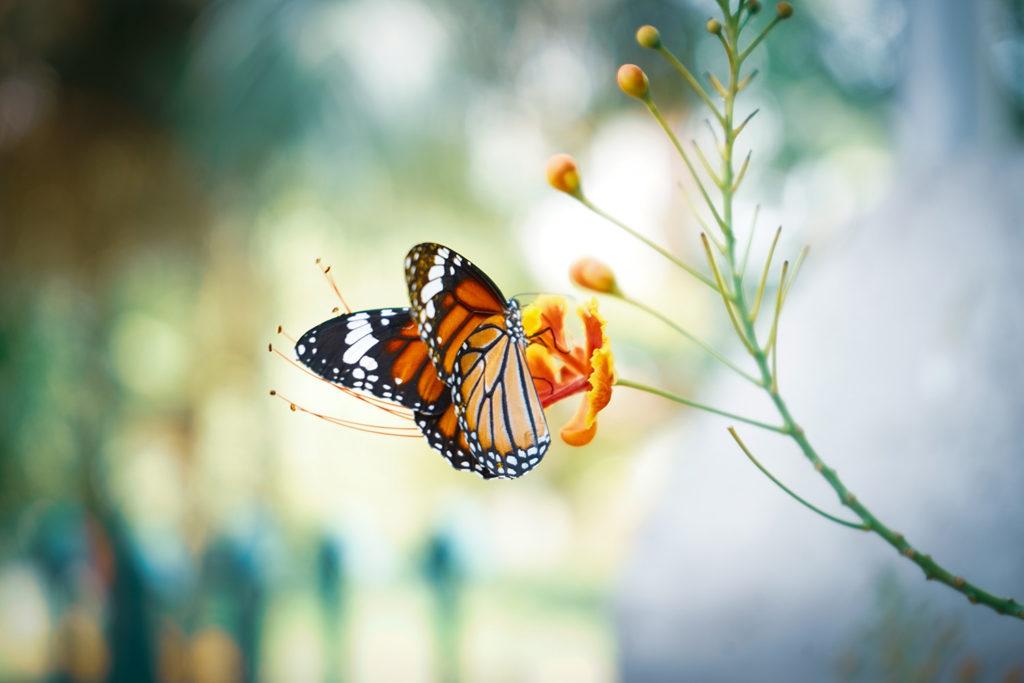 programme papillon
