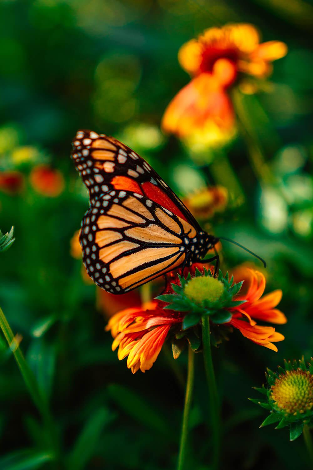 programme papillon-2